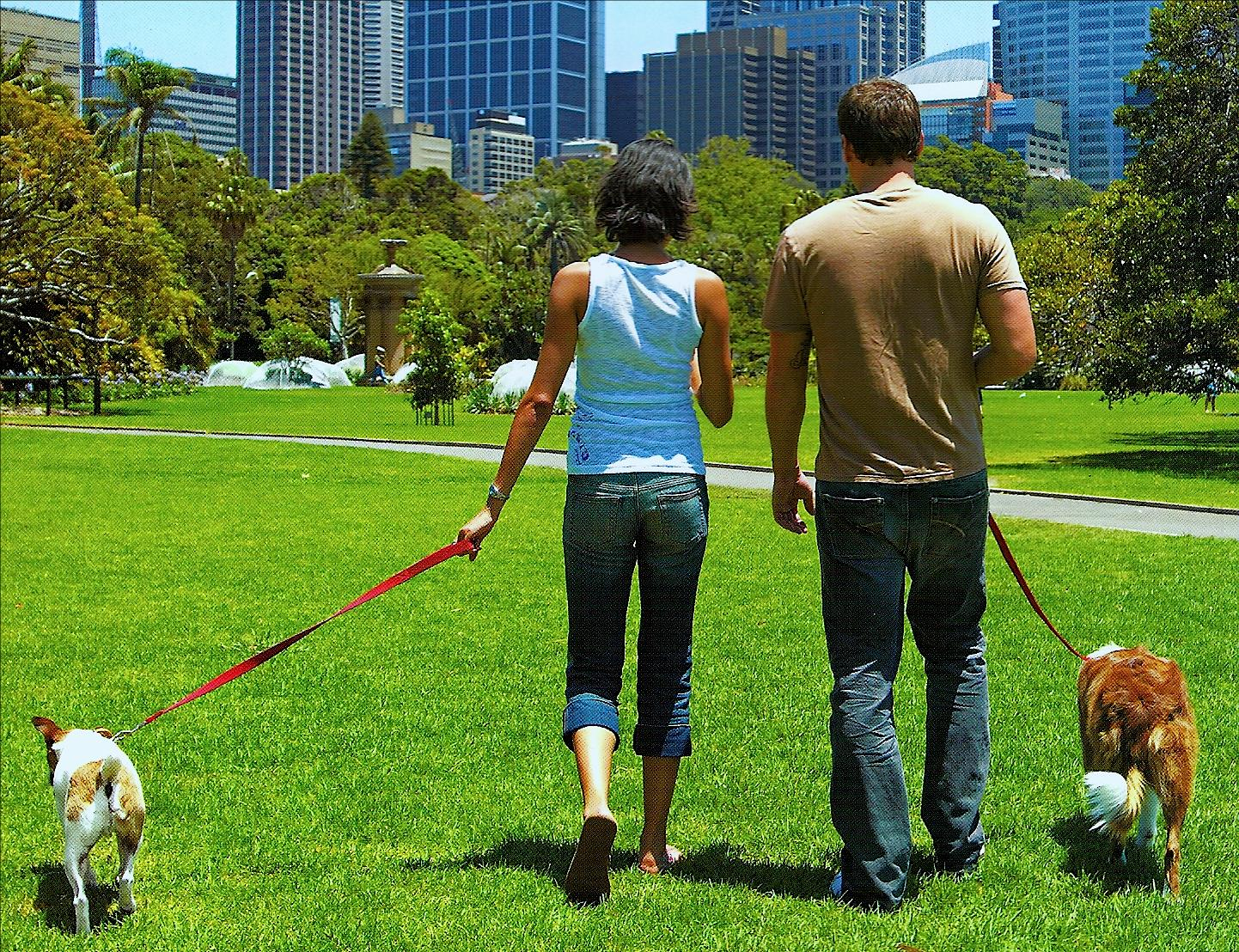 Couples walking with dog