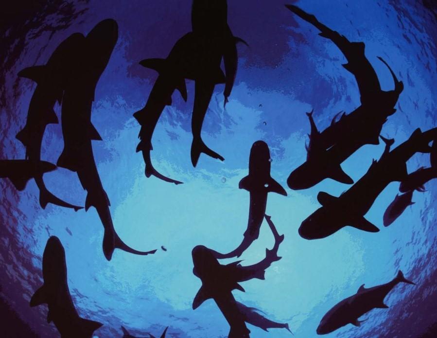 circling-sharks-main21
